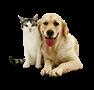 Animals/Pets/thú cưng